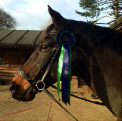 Image of horse and rosette