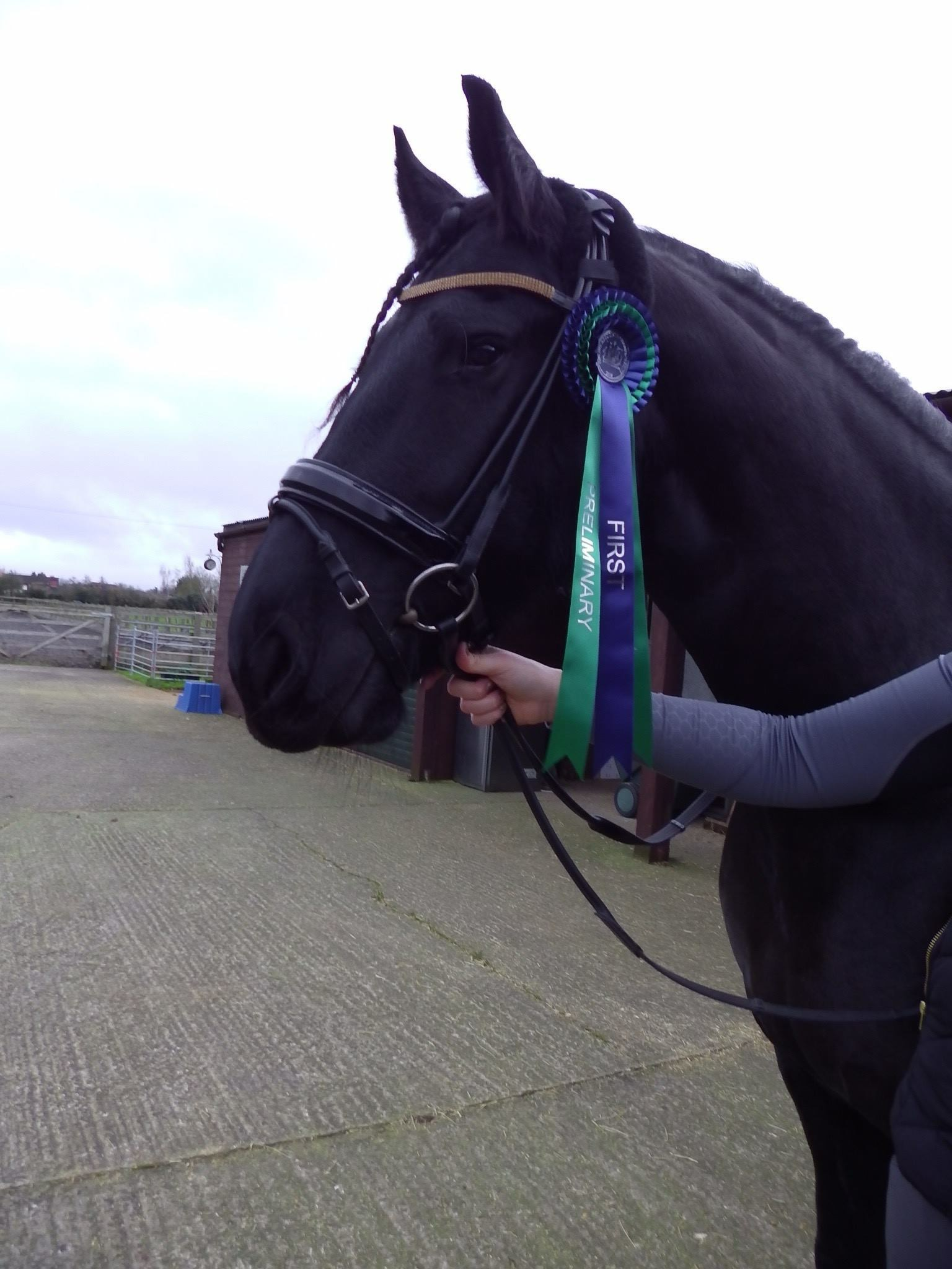 Horse and rosette