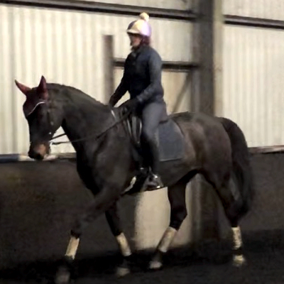 Horse and rider riding an online dressage test