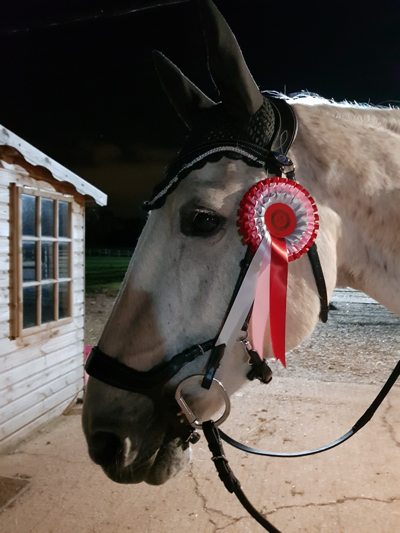 Horse with online dressage rosette