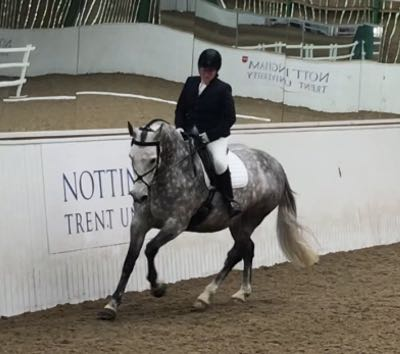 Horse and rider in an arena