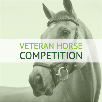 Veteran horse online dressage competition