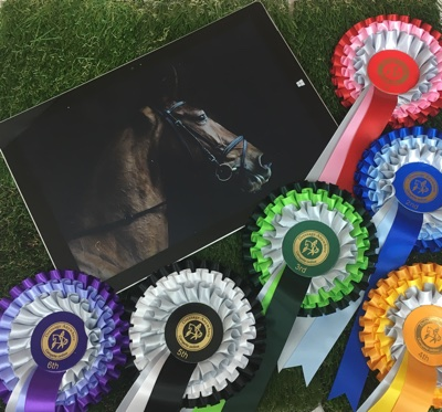 Ex-racehorse to dressage horse